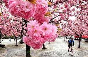 Điều kiện định cư ở Nhật